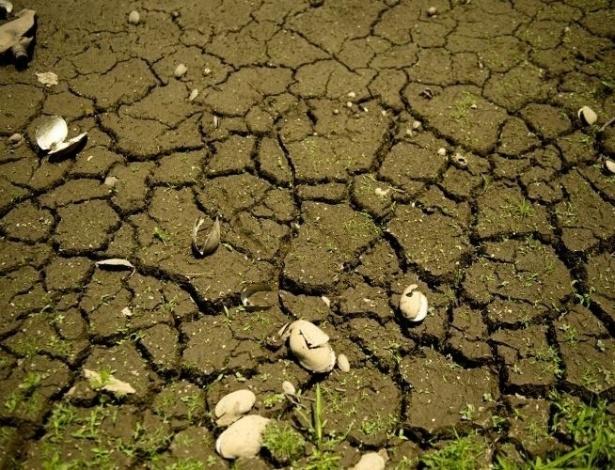 O período de estiagem prejudica as propriedades rurais e moradores gaúchos, desde o final do ano passado