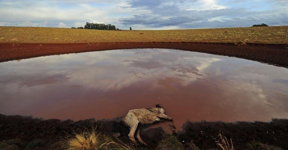 Propriedade rural em Capão do Cipó (RS) registra perda de animais por causa da seca na região