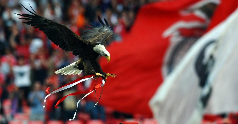 Águia Vitória, mascote da equipe portuguesa de futebol Benfica, voa no Estádio da Luz, em Lisboa, em Portugal