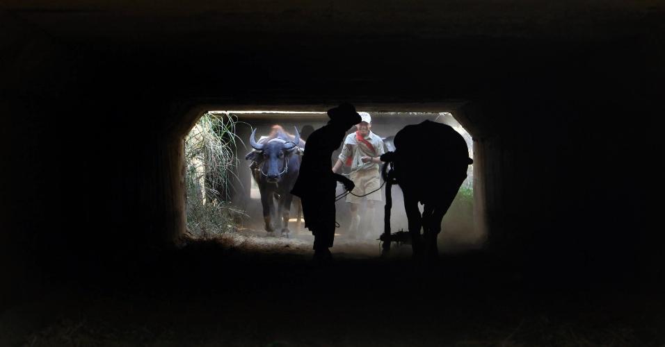 Homens puxam búfalos sob uma ponte em uma rodovia de ligação entre a antiga capital Yangon e a nova Naypyitaw, em Mianmar