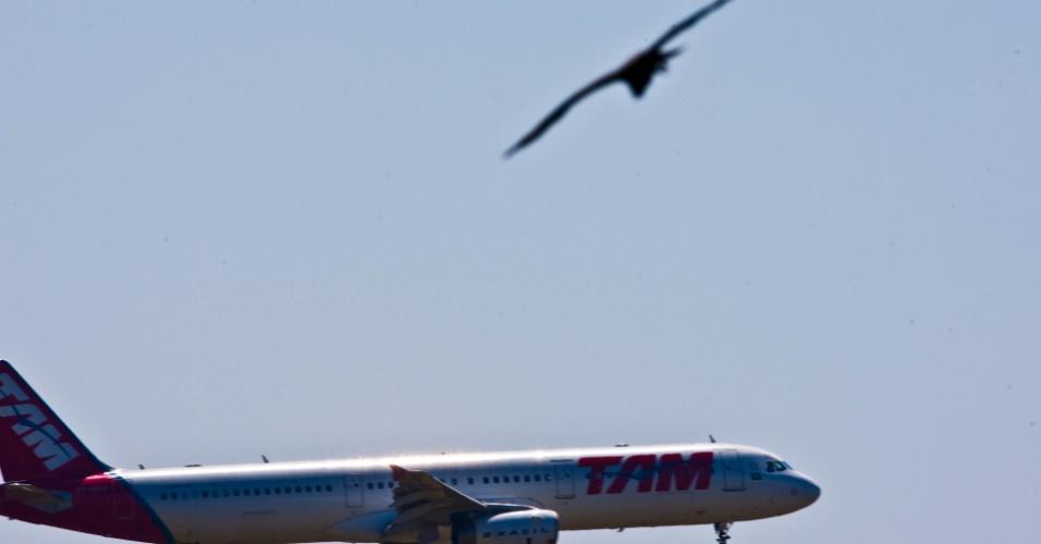 Urubu voa próximo a avião no aeroporto de Cumbica, em Guarulhos