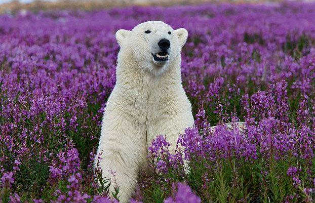 Urso desolado