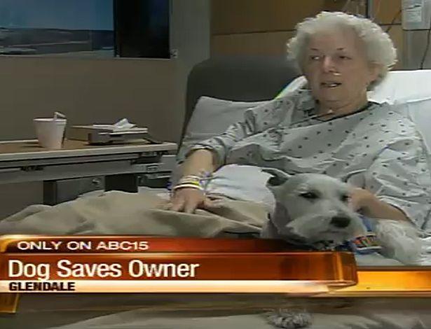 Cachorro salva a dona