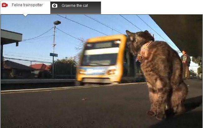 Que trem é esse? Gato vai até estação esperar a dona