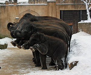 Divulgação/Zoológico de Hannover