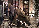 O simbólico touro financeiro (?)