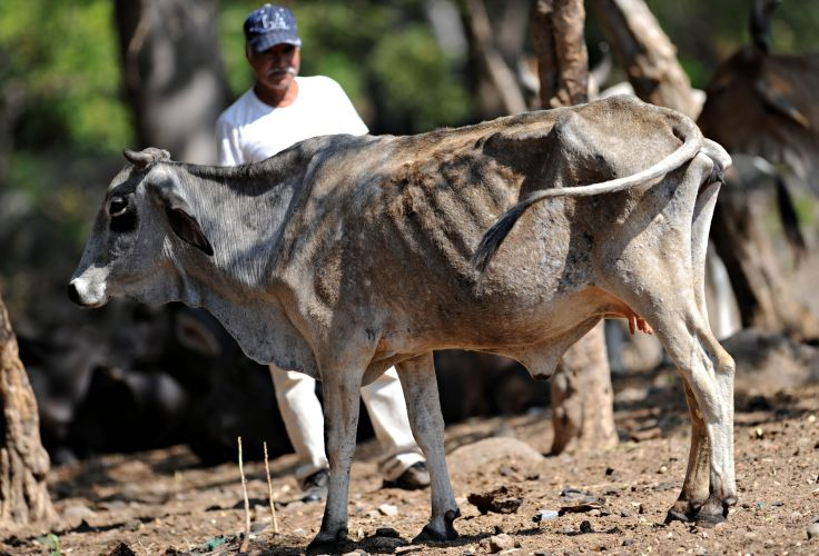 Nicarágua sofre com a seca