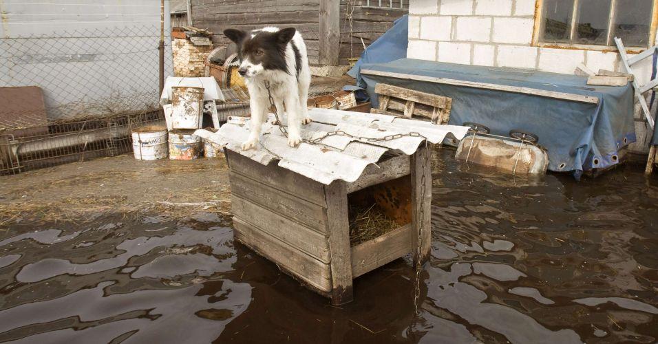 Cão se protege de enchente