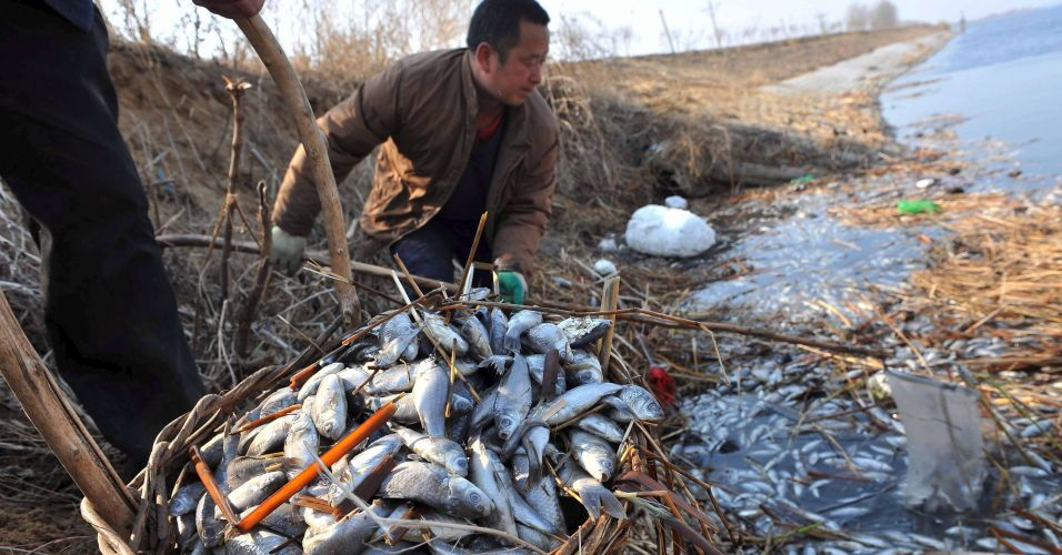 Peixes mortos na China