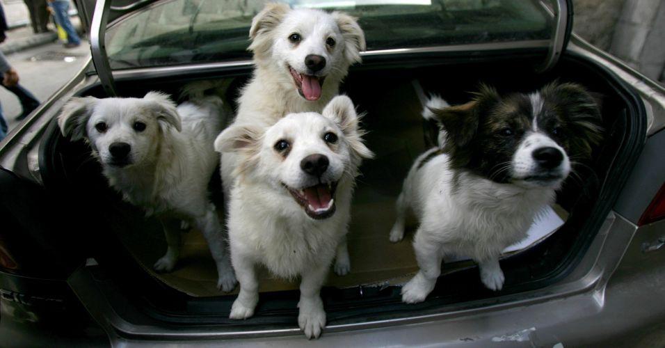 Cachorros à venda na Jordânia
