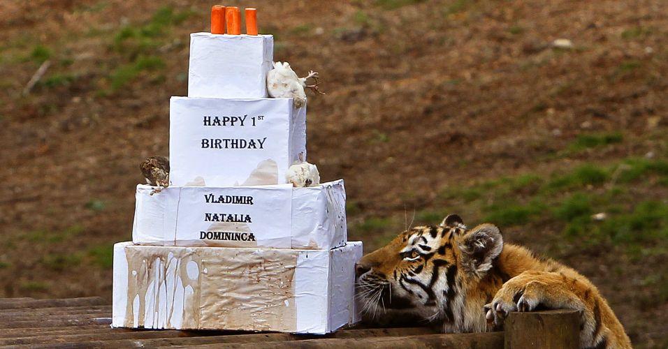 Aniversário de tigre