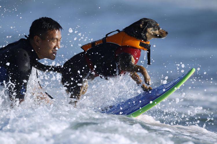 Surfe canino