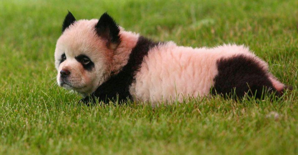 Cachorro na China