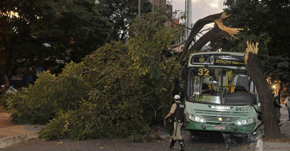 Ônibus bate em árvore em BH