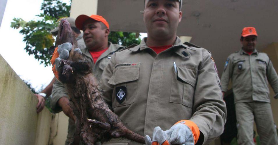 Gambá capturado no Rio