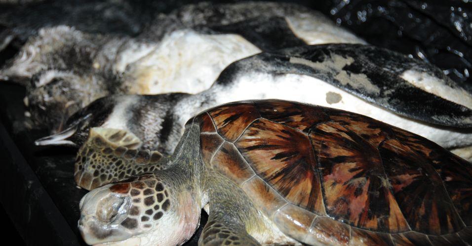 Animais mortos no litoral