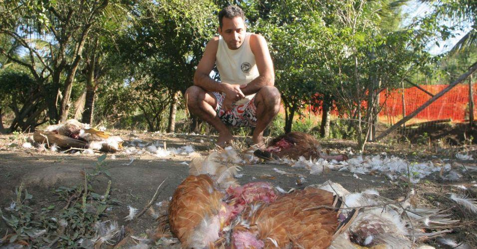 Animais mortos no Rio