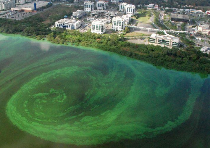 Algas no Rio