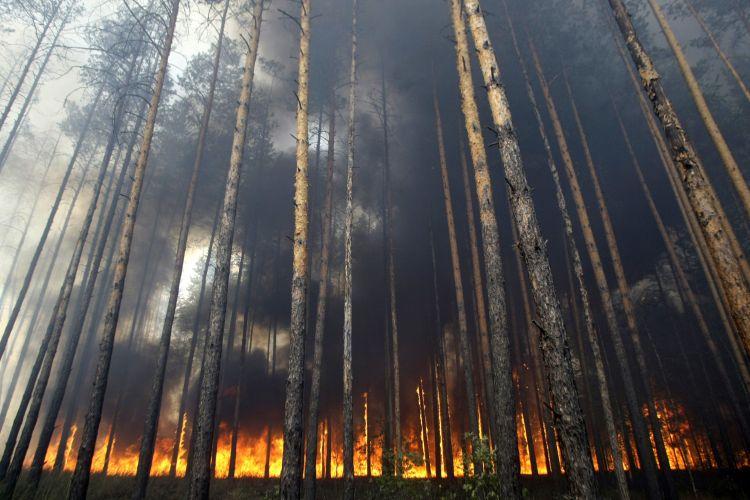 Floresta pega fogo