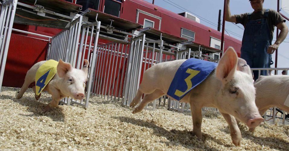 Corrida de porcos nos EUA