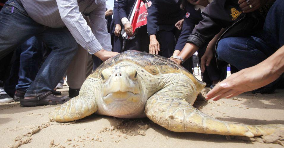 Tartaruga na Tailândia