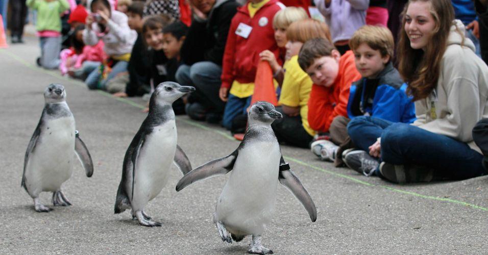 Pinguins e crianças