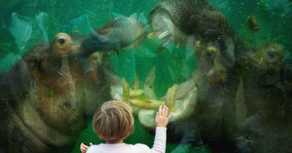 Hipopótamos na Alemanha