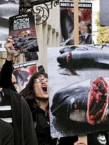 Protesto pró-baleias