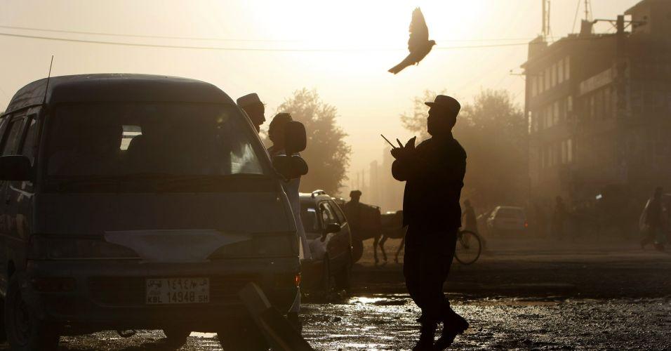 Pomba em Cabul