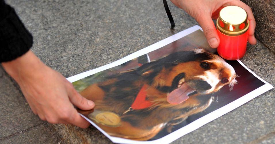 Homenagem a cachorros na Ucrânia