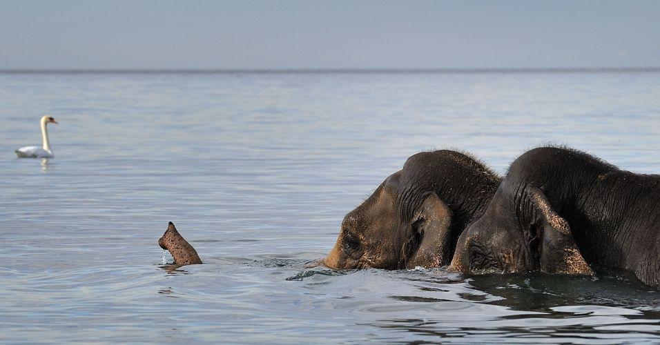 Elefantes na Suíça