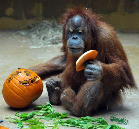 Hallowen no zoológico