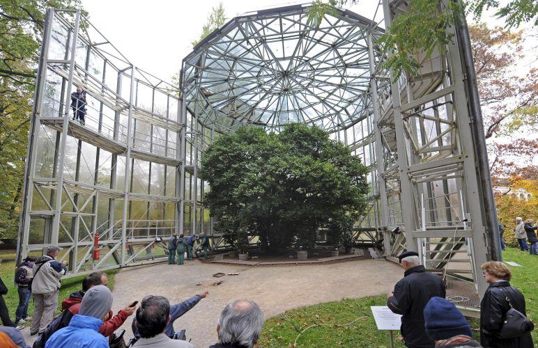 Árvore bicentenária