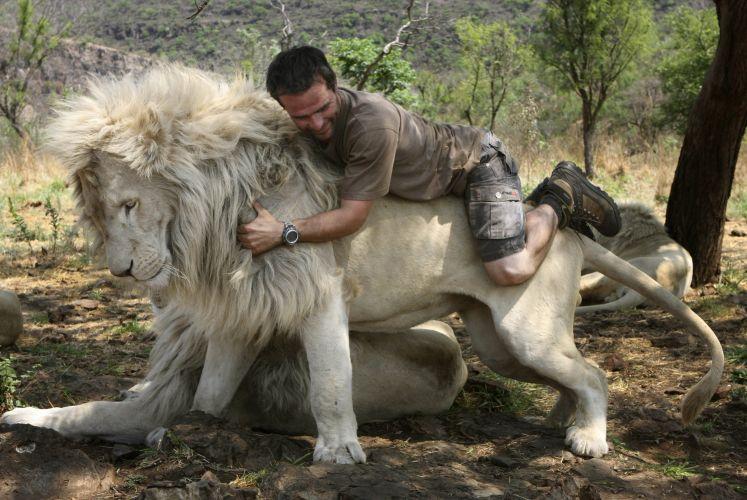Leão branco na África