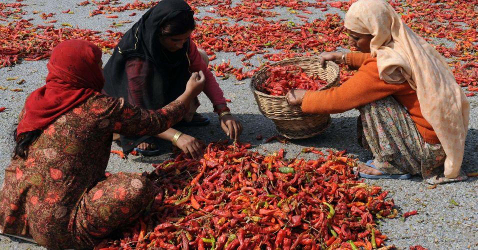Pimenta da Caxemira
