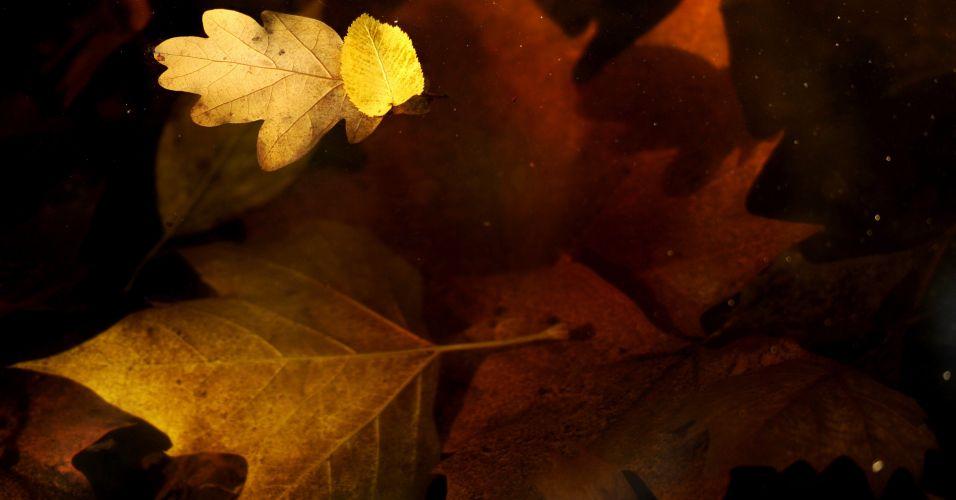 Folhas de outoro