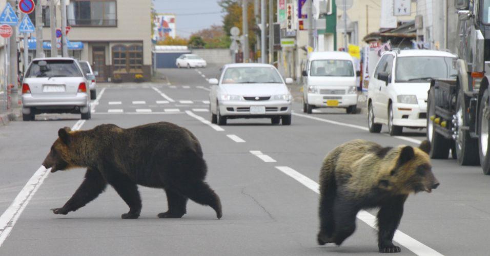 Ursos no Japão