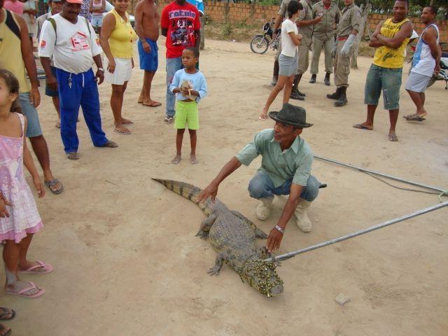 Jacaré é capturado na Bahia