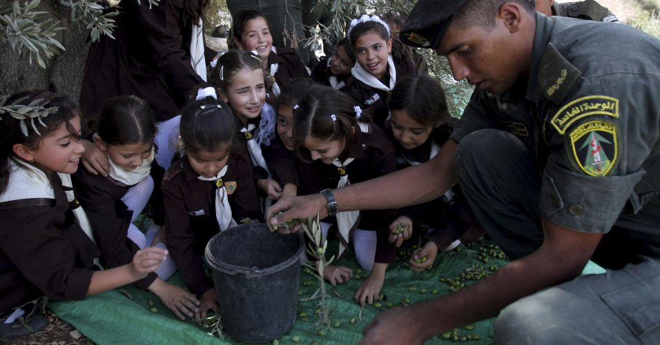 Azeitonas na Cisjordânia