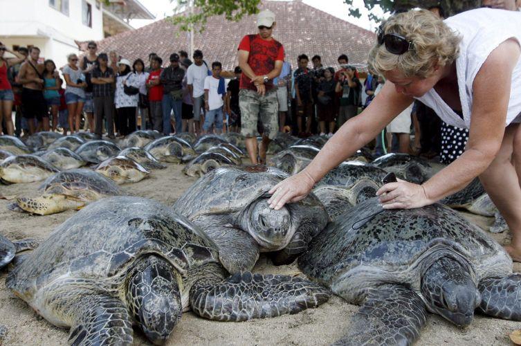 Turistas ajudam a levar tartarugas ao mar em Bali