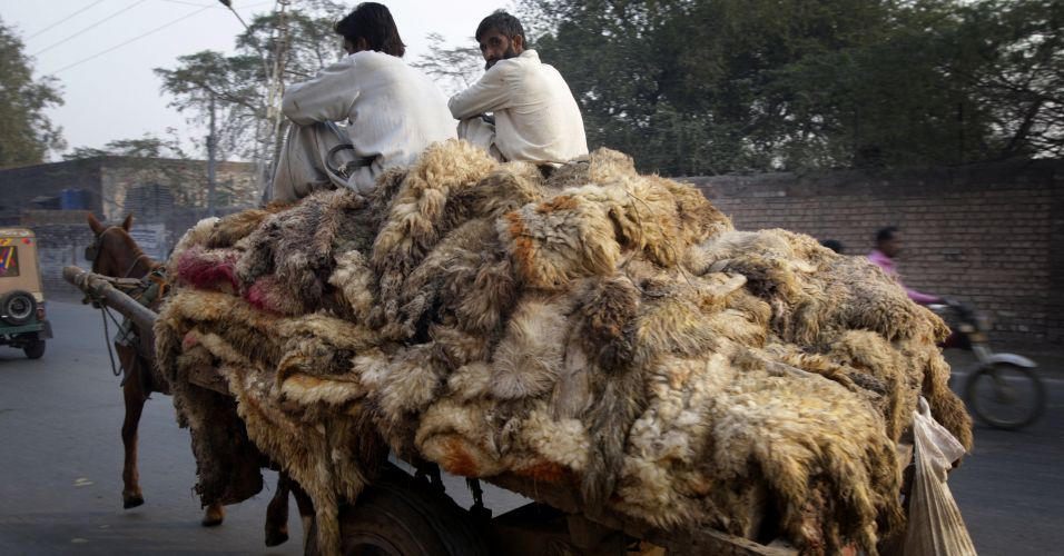 Peles no Paquistão