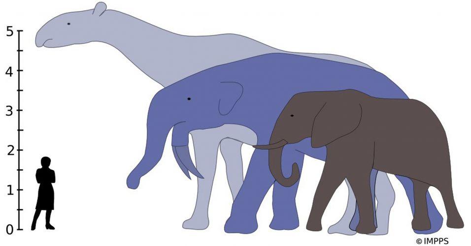 Maiores mamíferos