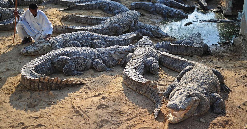 Crocodilos no Paquistão