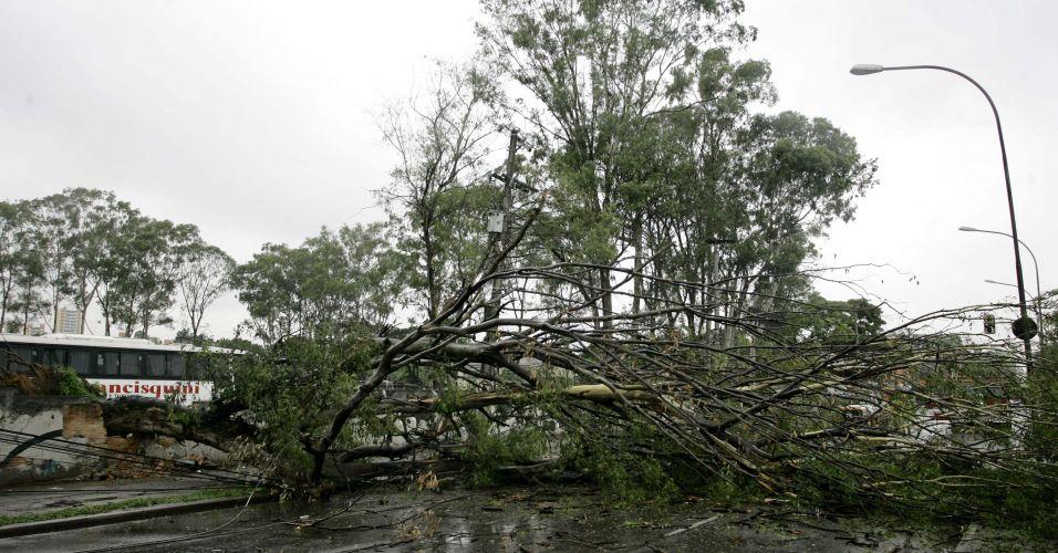 Árvores caídas em SP