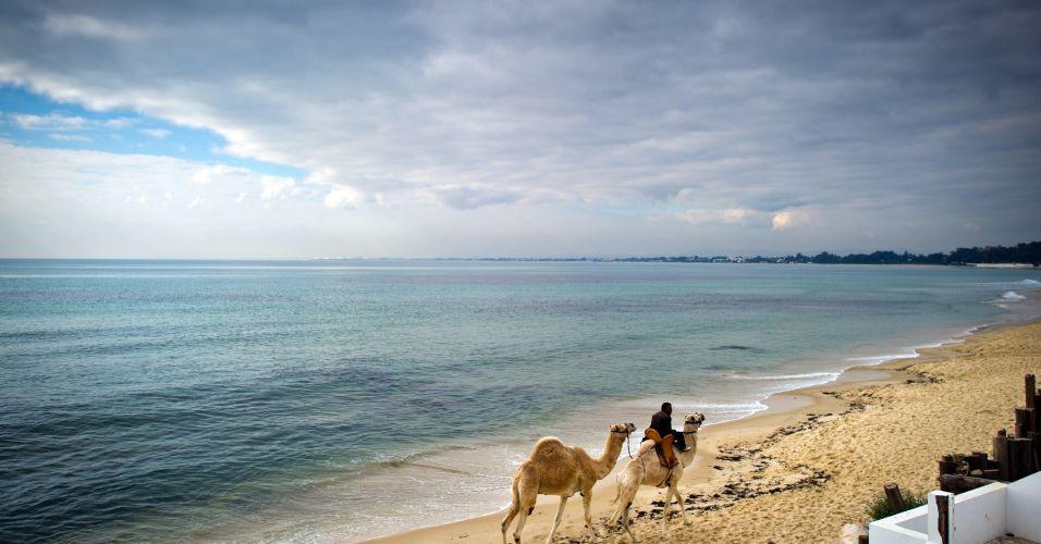 Camelos na Tunísia