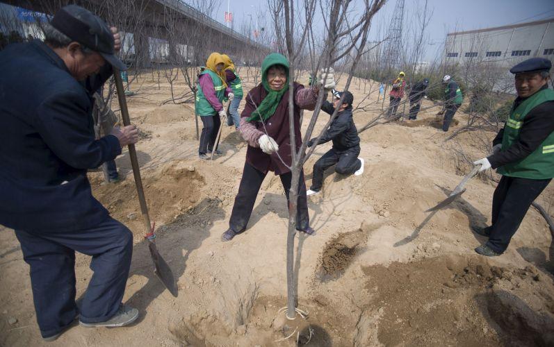 Chineses plantam árvores