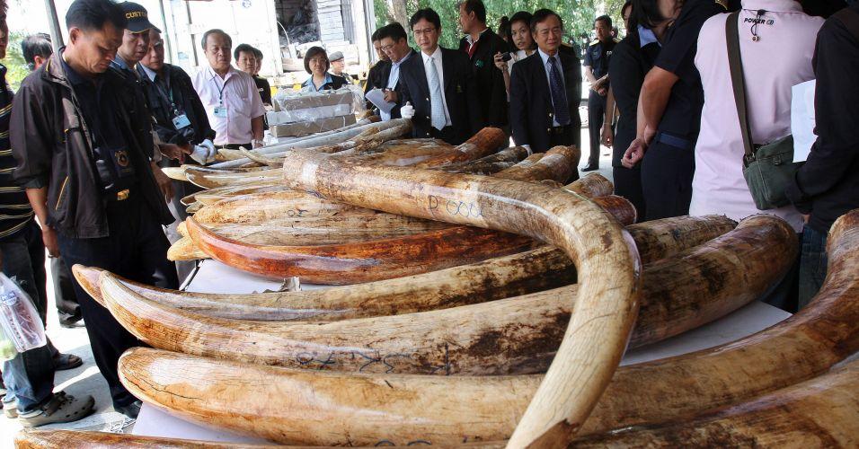 Marfim na Tailândia