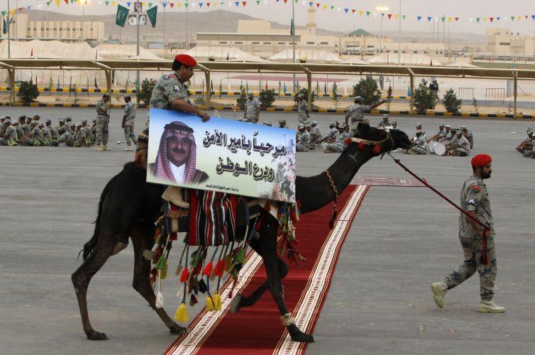 Camelo na Arábia Saudita