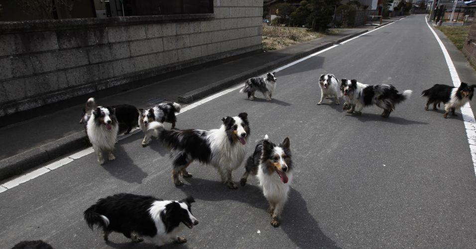 Cães no Japão