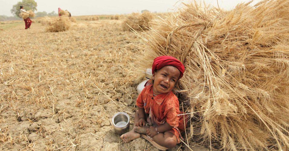 Criança em plantação de trigo na Índia